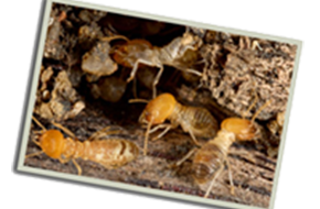 Termites | 360 Pest Solutions | Spartanburg, SC | (864) 706-5404